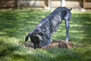 Artificial Grass Can Eliminate These 3 Problems Pets Can Cause on Lawns