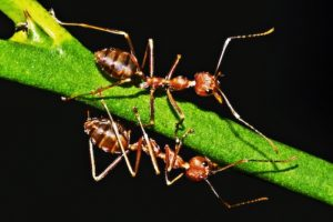 Tired of Dealing with Insects in Your Lawn? Check Out These Tips to Treat the Problem Naturally