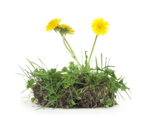 Discover Natural Solutions for Getting Rid of Weeds in Your Artificial Grass