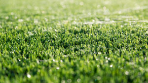 4 Advantages to the Draining Process in Artificial Grass