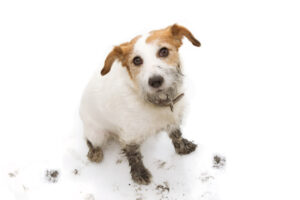 Simple Ways to Put an End to Your Dog's Paws Making a Mess in Your Living Room